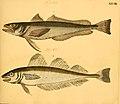 Naturgeschichte in Bildern mit erläuterndem Text (Taf. XXVIII) (6059208014).jpg
