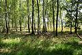 Naturschutzgebiet Elmpter Schwalmbruch Sommer 2015 -8836.jpg