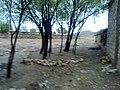 Navidhand last 185 - panoramio.jpg