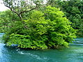 Neuhausen - Rhein IMG 3720.jpg