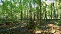 Niedersachsen, Dötlingen, ND138 Schlatt im Stühe.jpg