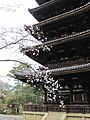Ninna-ji National Treasure World heritage Kyoto 国宝・世界遺産 仁和寺 京都42.JPG
