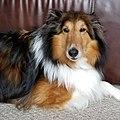 Nolan is a handsome dog.jpg