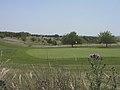 Northern corner of Hockley golf course, Twyford Down - geograph.org.uk - 25707.jpg