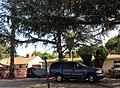 Northridge, Los Angeles, CA, USA - panoramio (99).jpg
