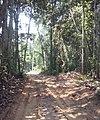 Nova Mutum - State of Mato Grosso, Brazil - panoramio - LUIS BELO (1).jpg