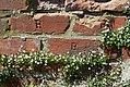 Nyköpingshus - KMB - 16001000018614.jpg