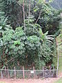 Oahu-Kahaluukalo-AhuimanuStream-fence.JPG