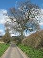 Oak Tree on Watery Lane - geograph.org.uk - 1805645.jpg