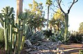 Oasis Country Club Desert Garden - panoramio.jpg