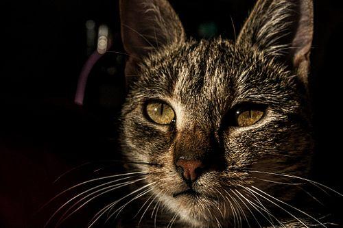 41c6eaaa2488 Κατοικίδια γάτα.