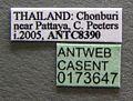 Oecophylla smaragdina casent0173647 label 1.jpg