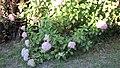 Old Vineyard Visit - panoramio (5).jpg