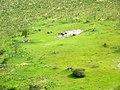 Olifanten in de Okovango Delta (6558970459).jpg