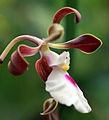 Orchid (8680403086).jpg
