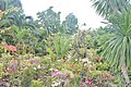 Orchid Gardens Bali, Indonesia - panoramio (4).jpg