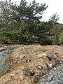 Oregelbunden stensättning i Ruddalen (Raä-nr Västra Frölunda 96-1) 2412.jpg