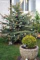 Ostereierbaum 5864.jpg