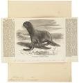 Otaria ursina - 1865 - Print - Iconographia Zoologica - Special Collections University of Amsterdam - UBA01 IZ21100075.tif