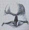 Ottův slovník naučný - obrázek č. 3158.JPG