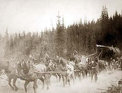 Overland Trail horse team.jpg
