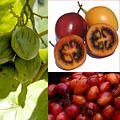 Owoce Tamarillo.jpg