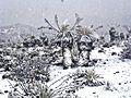 Páramo andino venezolano nevado.jpg