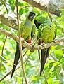 Pássaros Namorando.jpg