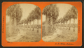 Palmetto Avenue, Fort George, Fla, from Robert N. Dennis collection of stereoscopic views.png