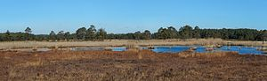 Damselfly - Fine damselfly habitat: panorama of Thursley Common, looking over the acid bog pools