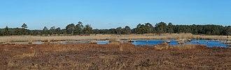 Damselfly - Fine damselfly habitat: panorama of Thursley Common, looking over the acid bog pools
