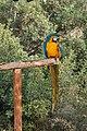 Paphos Zoo, Cyprus - panoramio (37).jpg