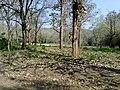 Parambikulam Tiger Reserve - panoramio (12).jpg