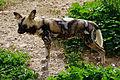 Parc animalier, Friguia, Tunisie, 25 décembre 2015 DSC 1858.jpg