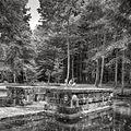Parc du Chateau de Courances (28279223090).jpg
