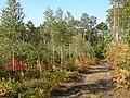 Park Krajobrazowy Rogalin.jpg