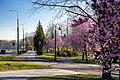 Park Sielecki, Sosnowiec, 3 Maja street.jpg