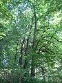 Park dworski Czachórskich (8).jpg