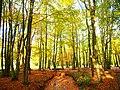 Park views in autumn (Netherlands 2011) (6311928838).jpg
