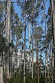 Parque Nacional Lago St Clair-Tasmania-Australia02.JPG