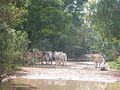 Parque nacional Aguaro-Guariquito 050.jpg