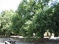 Paseo de Randurias, en Jérica (217224795).jpg
