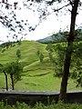 Pasture land In Chitlang.jpg