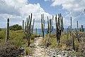 Path to Wayaka 3 (2447871606).jpg