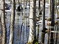 Pavasaris - panoramio (2).jpg