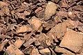Petroglyphs, Dampier Peninsula.jpg