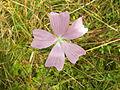 Pflanze 0021b.jpg