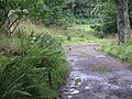 Pheasants running - geograph.org.uk - 932161.jpg