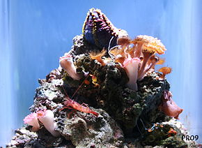SE Asian Coral Reefs