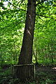 Pidhorodne-modryna-n2-15058077.jpg